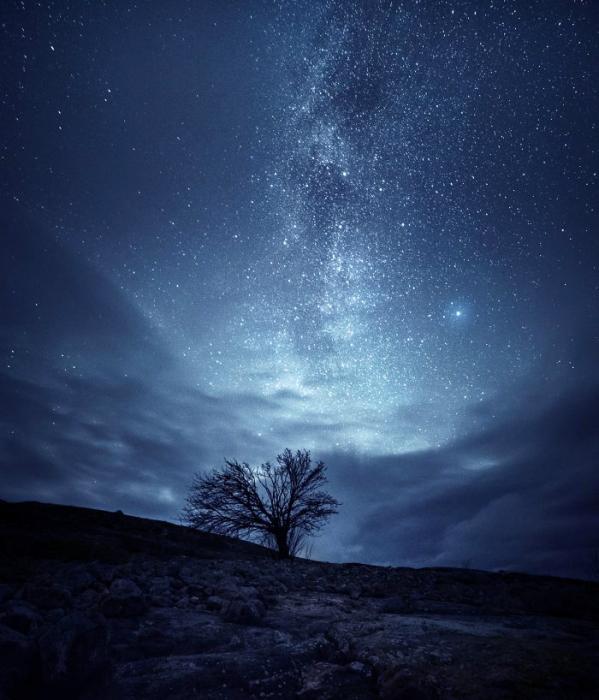 Галактическое дерево. Автор: Oscar Keserci.
