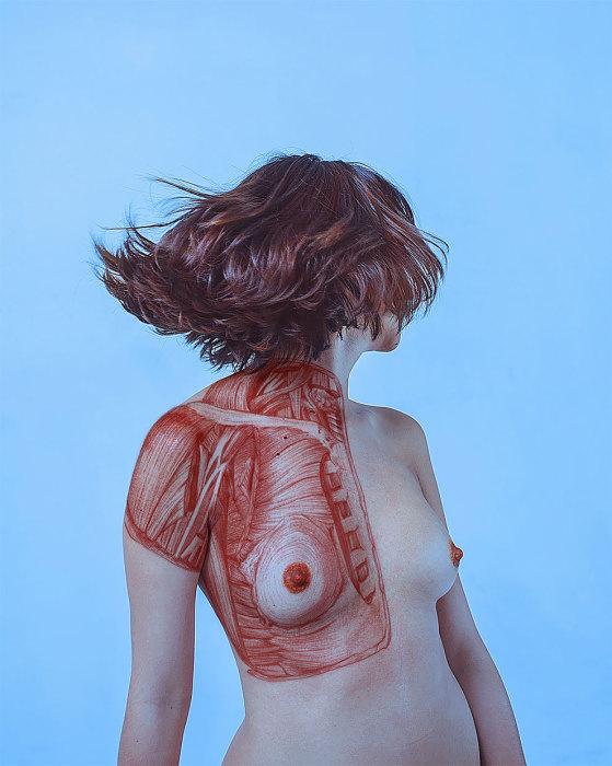 Грудные мышцы. Автор: Paola Rojas Н.