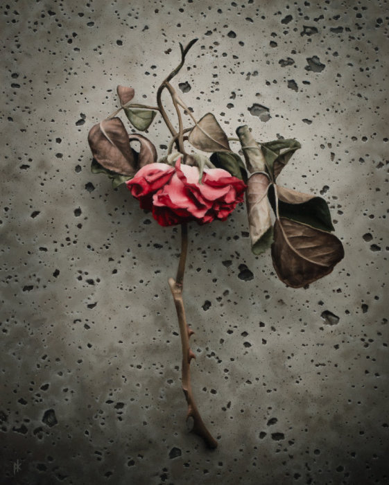 Роза. Автор работы: Patrick Kramer.