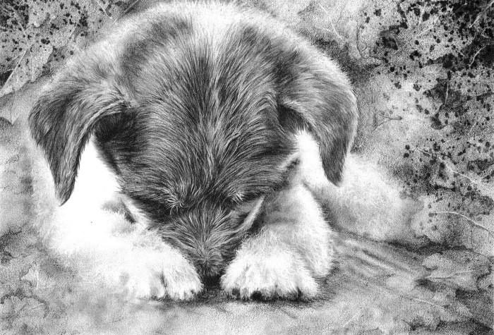 Очаровательный щенок. Автор: Peter Williams.