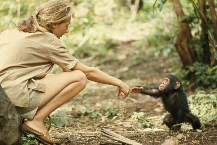 Эта женщина является ведущим мировым приматологом. \ Фото: media.nationalgeographic.org.