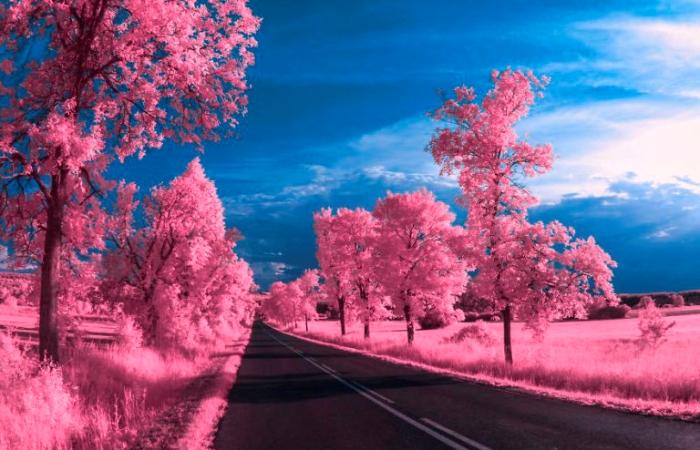 Мир в розовом цвете. Автор: Q'bot Qbotcenko.