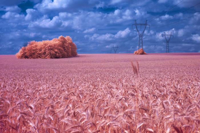 Фантастическое розовое поле. Автор: Q'bot Qbotcenko.