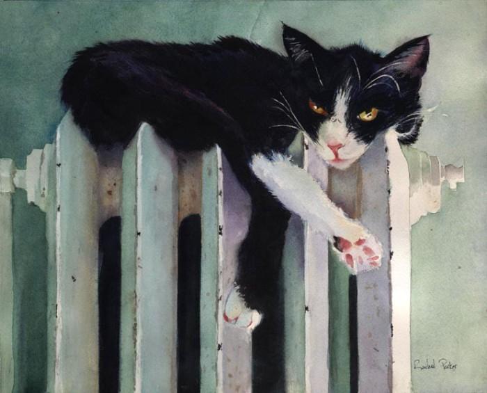 Чёрно-белый кот. Автор: Rachel Parker.
