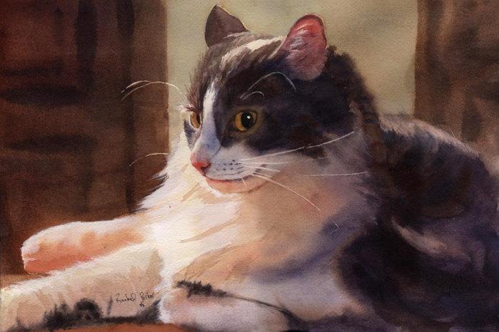Бело-серый кот. Автор: Rachel Parker.