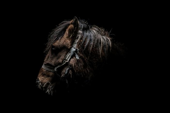Лошадь. Автор: Remi Chapeaublanc.