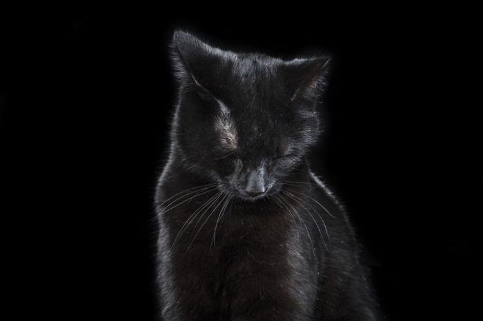 Смущение с ноткой грусти. Фото Rob Bahou.