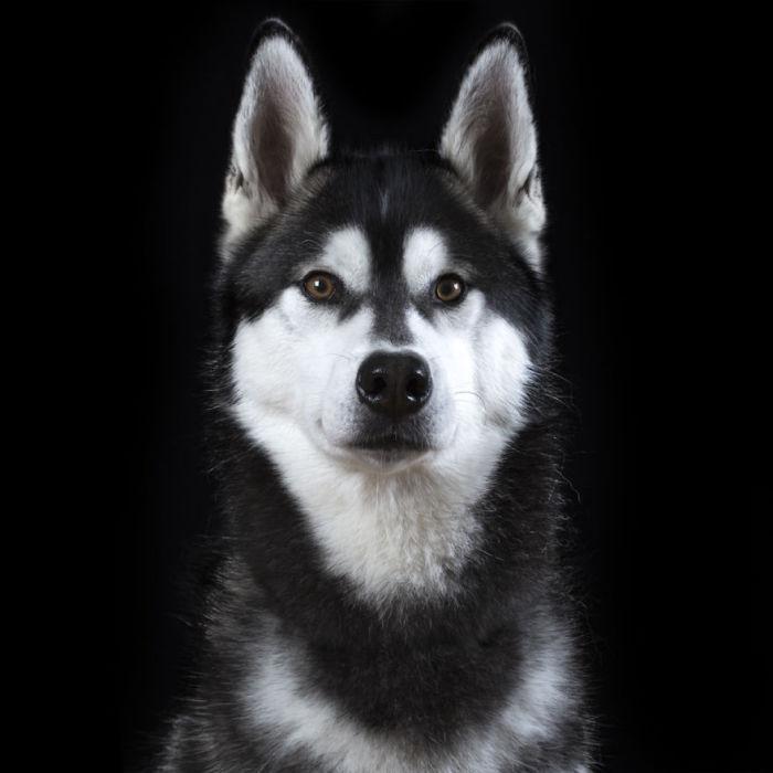 Портрет собаки по имени Скотт. Фото Rob Bahou.