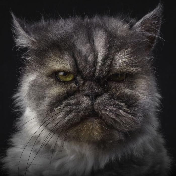 Мистер само недовольство. Фото Rob Bahou.