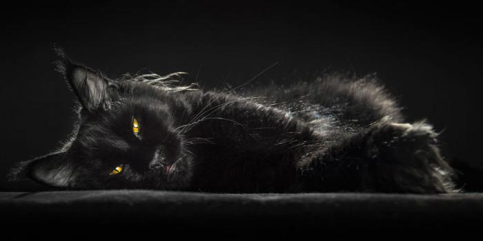 Чернее ночи. Автор: Robert Sijka.