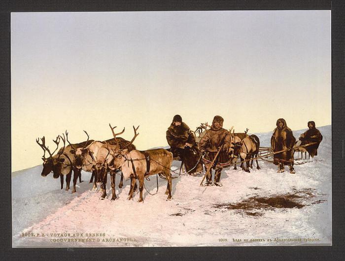 Езда на оленях в Архангельской губернии.