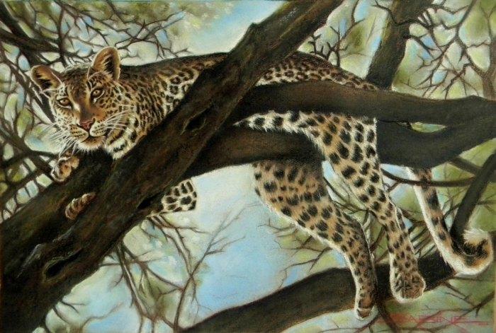 Леопард на дереве. Художник: Сабина Барбэ (Sabine Barber).