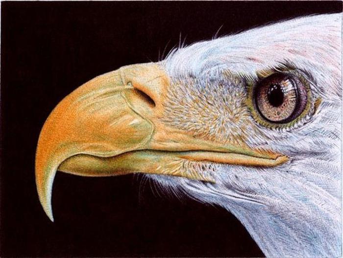 Орел. Автор: Samuel Silva.