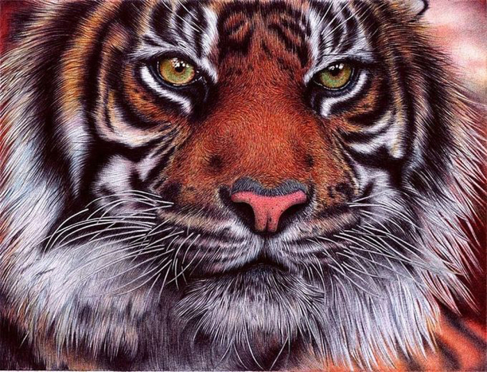 Тигр. Автор: Samuel Silva.