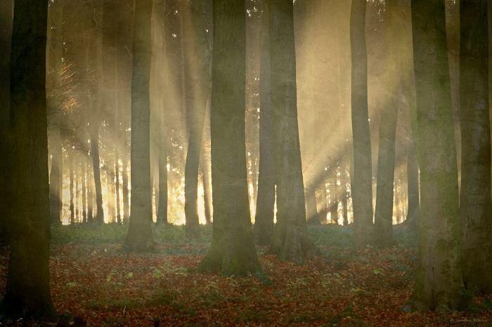 Первые лучи солнца. Автор: Sandra Roeken.