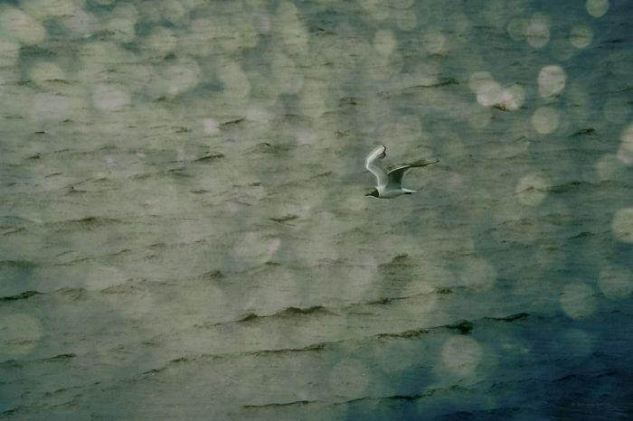 Если бы я мог летать. Автор: Sandra Roeken.