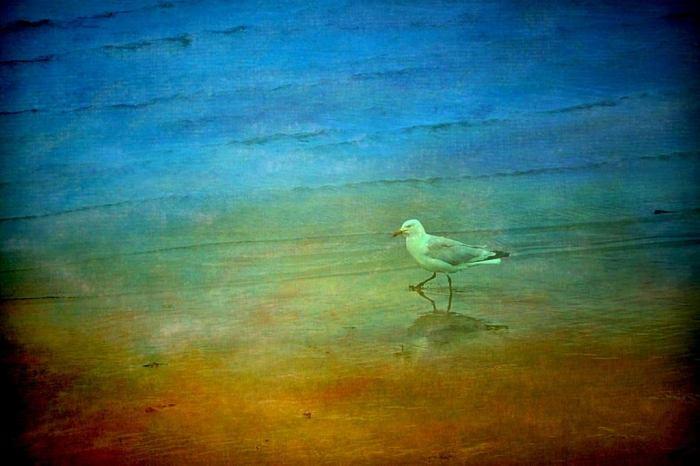Прогулка по пляжу. Автор: Sandra Roeken.