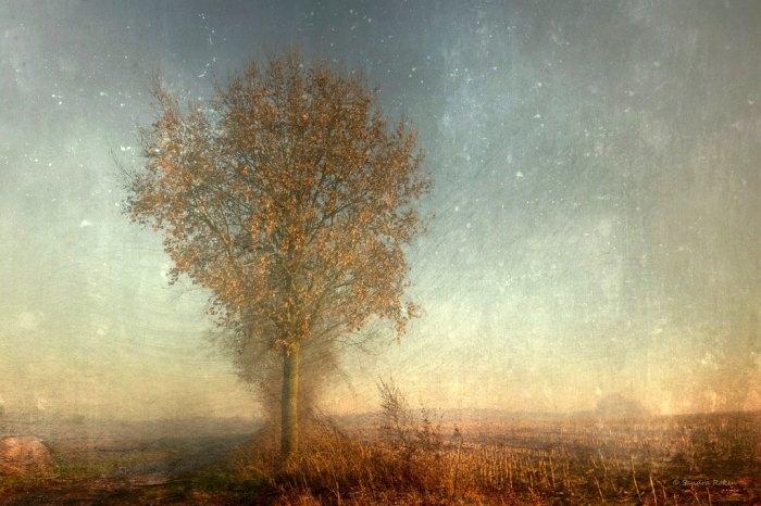 Нежные прикосновения осени. Автор: Sandra Roeken.