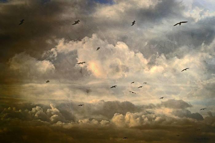 Свобода.  Автор: Sandra Roeken.