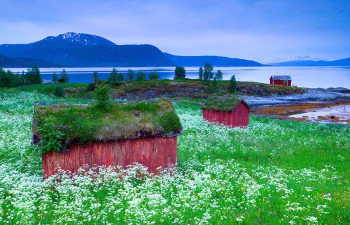 Сказочные скандинавские домики, чьи крыши покрыты зеленью.