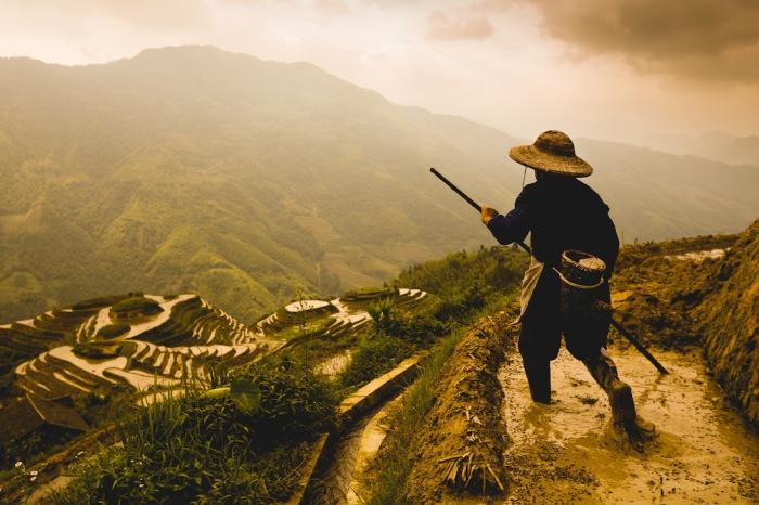 Позднее утро, рисовые террасы Драконий хребет в Луншэн, Китай. Автор фото: Scott Gable.