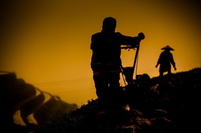 Посадка риса на полях. Автор фото: Scott Gable.