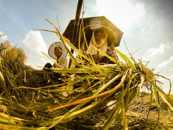 Сотрудники тайваньской государственной рисовой фабрики. Автор фото: Scott Gable.