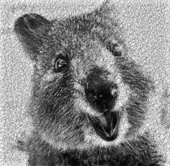 Квокка - самое дружелюбное животное на этой планете! Автор: Sergej Stoppel.