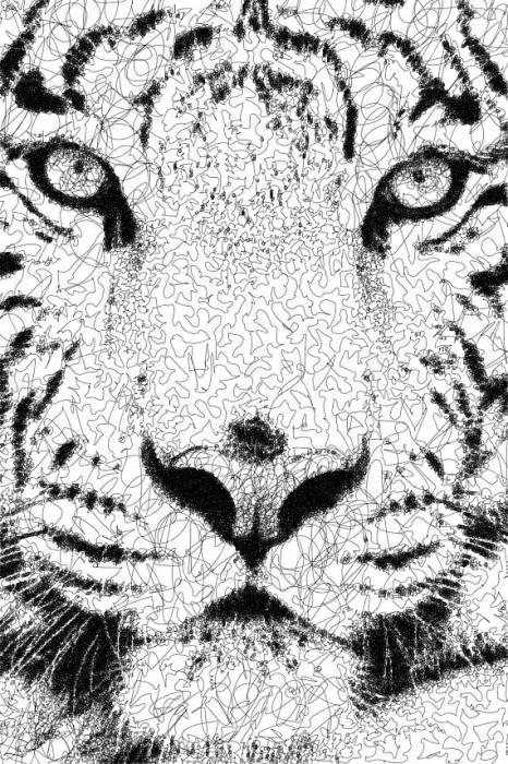 Белый тигр. Автор: Sergej Stoppel.