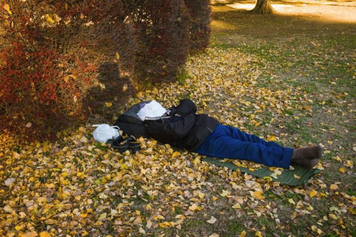 Осенний релакс. Автор: Shin Noguchi.