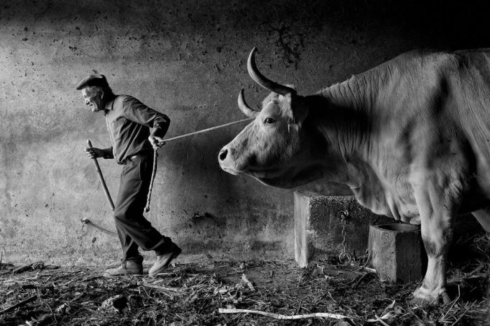 Португальские сельские жители – начало дня. Автор:  Jorge Bacelar.
