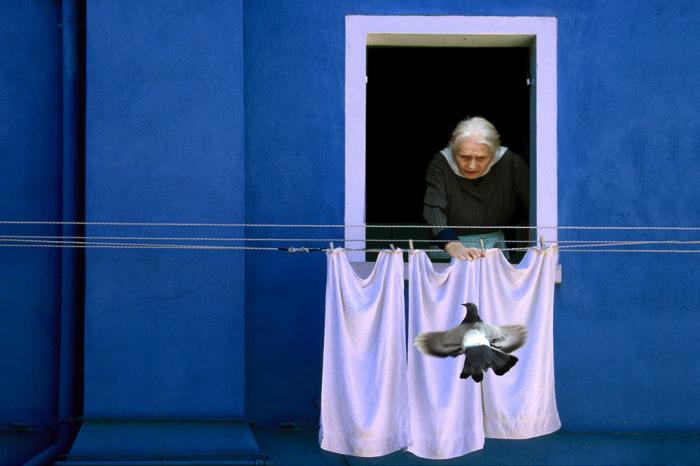 Голубь. Автор: Maurizio Tiegh.