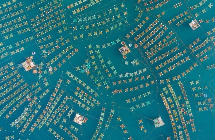 Ферма омаров, провинция Фу Йен, центральный Вьетнам. Первая премия в категории пейзажей среди любителей-энтузиастов. Автор: Trung Pham.