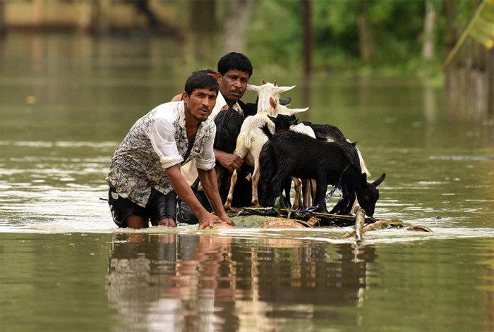 Округ Нагаон, штат Ассам, Индия. Автор: Anuwar Hazarika.