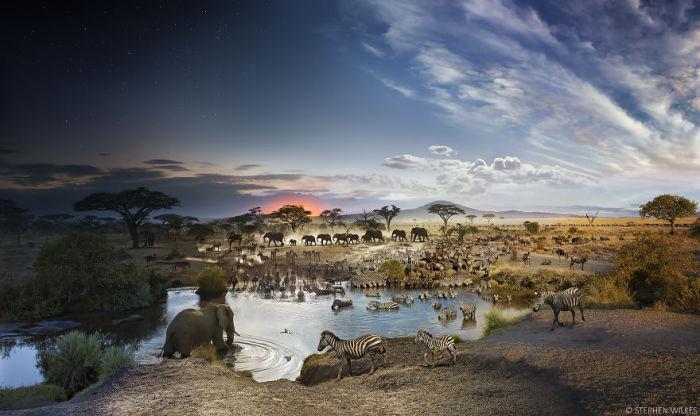 Национальный Парк Серенгети, Танзания. Ирреальные пейзажи в работах Стефана Вилкса (Stephen Wilkes).