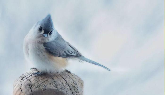Птичка-невеличка. Автор: Susan Hartman.