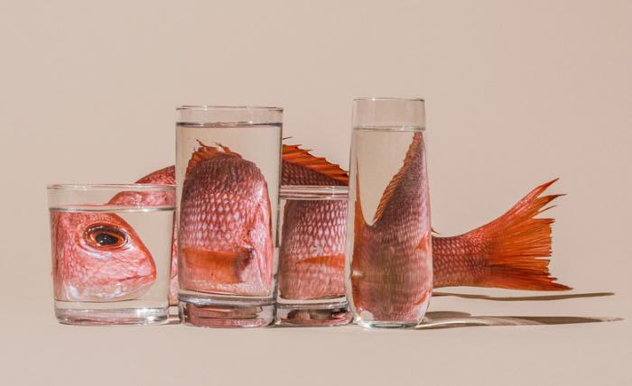 Рыбный день. Автор: Suzanne Saroff.