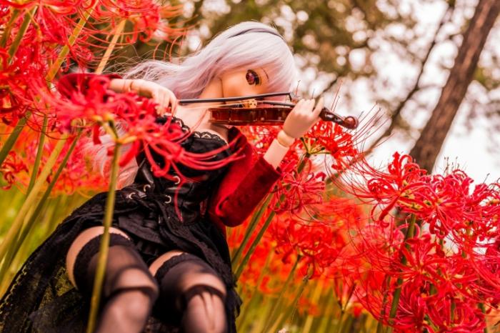 Одинокая мелодия. Авторы фото: Suzuhico и AZURE.