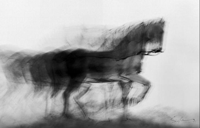 Чёрная лошадь, Мумбаи. Автор: Swarup Chatterjee.