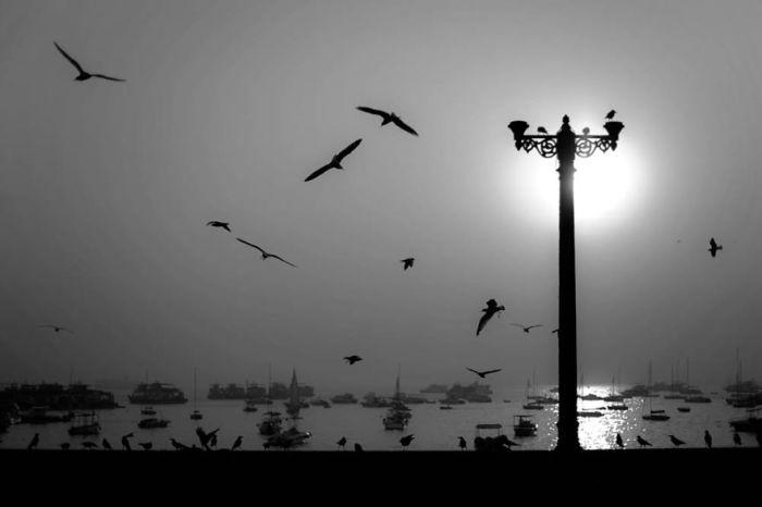Птицы и лодки, Мумбай-Харбор, Индия. Автор: Swarup Chatterjee.
