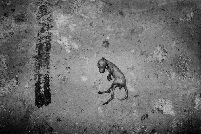 Плод кенгуру на обочине дороги. Автор: Trent Parke.