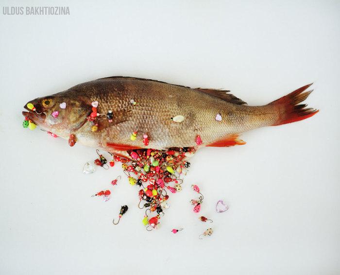 Золотая рыбка. Автор фото Юлдуз Бахтиозина (Uldus Bakhtiozina).