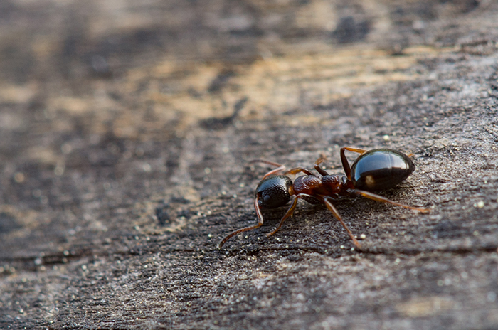 Антарктида, Арктика и некоторые др. отдалённые острова - единственные места в мире, не колонизированные муравьями.