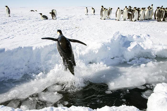 Антарктида - единственный континент без рептилий и змей.