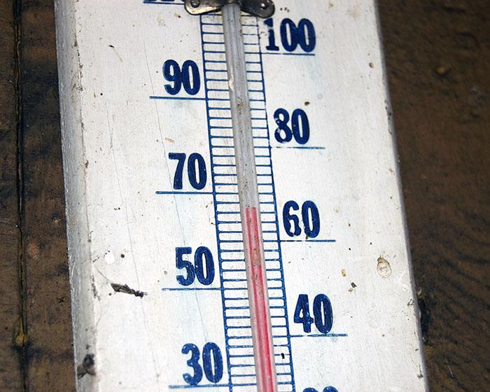 Самая высокая температура, когда-либо зафиксированная в Антарктиде, составила 63,5 °F (17,5 °C).
