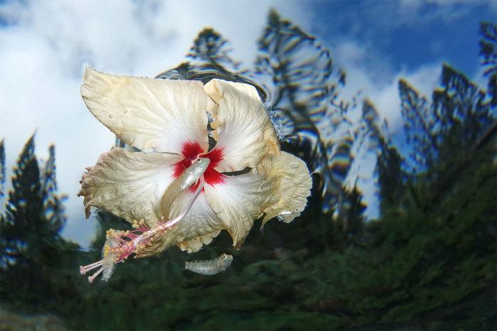 Цветочная сила. Автор: Джек Бертомье (Новая Каледония).