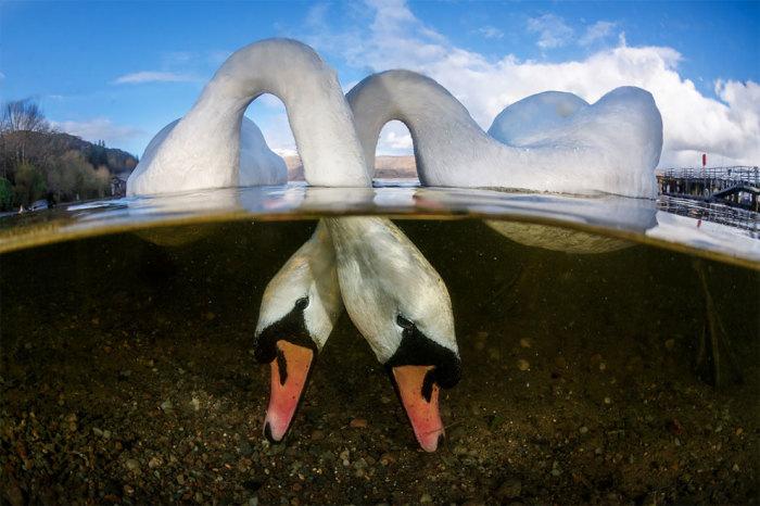 «Влюблённые птицы». Автор: Грант Томас (Великобритания).