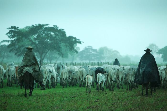Пантанал, Бразилия. Ковбои пасущие стада, могут путешествовать месяцами без остановки даже во время дождя или ветра. Автор фото: Uruma Takezawa.