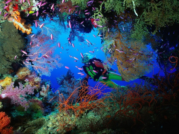 Подводный рай. Дайвинг во Вьетнаме.