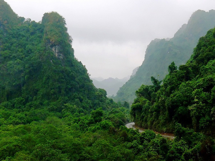 Национальный парк Кат-Ба, мангровые леса, бухта Халонг.